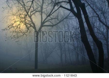 Foggy Blue Morning