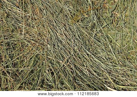 Hay With Cereals Other Wild Meadow Grasses