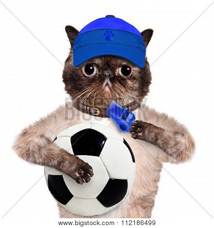 Cat with a white soccer ball