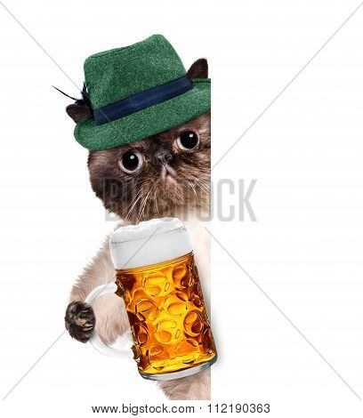 Cat with a beer mug.