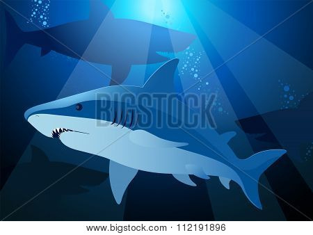 Shark Swimming Under The Sea With Sunlight