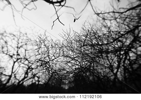 Tree Branches Center Spot Blur