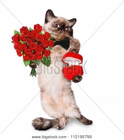 loving cat.