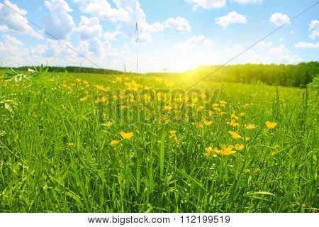 Flower field and sunlight in spring time.