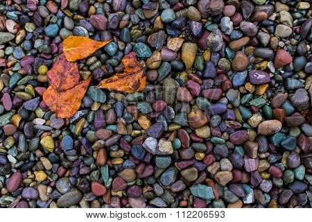 Wet leaves against rocks near the water's edge