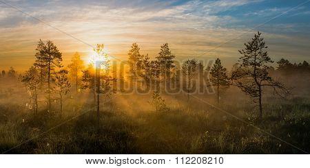 Sunrise in bog