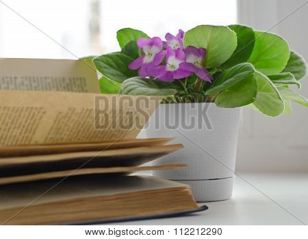 The Violet Flower On The Windowsill