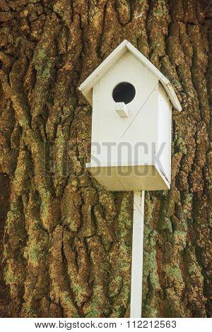White birdhouse on a century-old oak