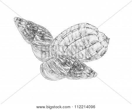 Ilustration of three sea shells