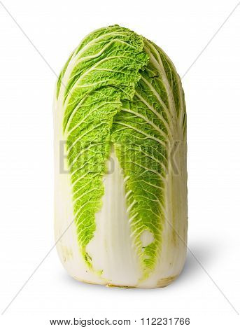 Chinese Cabbage Vertical View