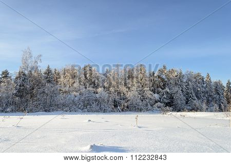 Winter Landscape With Fancy Snow-covered Trees