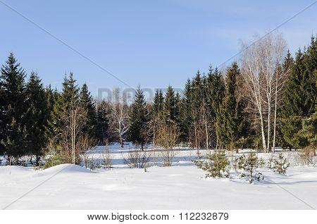 Glade In A Winter Forest