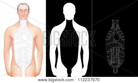 Illustration of excised male body with drawn outlined inner organs. Perfect to combine with vector images of this set. Completed with alpha channels.