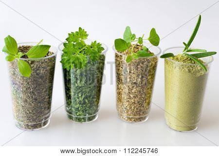 Collection Of Dried And Fresh Herbs - From Left: Marjoram, Parsley, Oregano, Rosemary