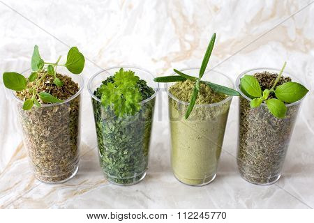 Collection Of Dried And Fresh Herbs - From Left: Oregano, Parsley, Rosemary, Marjoram