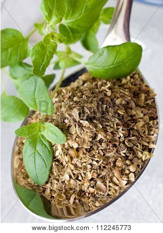Fresh And Dried Oregano / Origanum Vulgare
