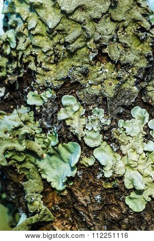 Moss And Lichen background
