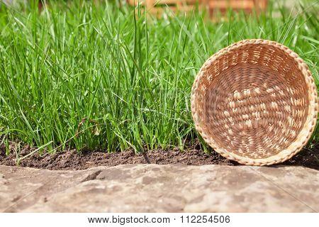 Basket in grass