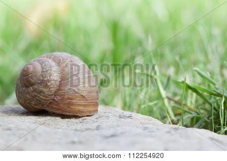 Snail on stone closeup