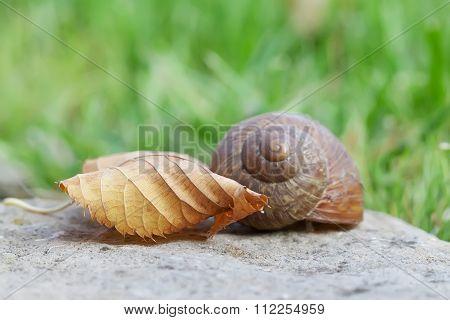 Snail and leaf closeup