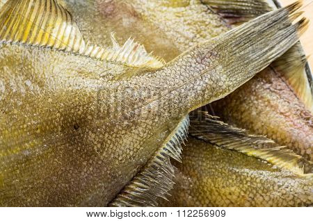 Closeup Of The Tail And Fins Flatfish