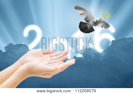 Hand Releasing A Bird Into The Air On Sky 2016 Background , All Concept , Beauty ,freedom,peace ,spi