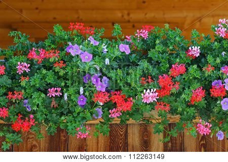 A house decorated with colorful flowers, Petunia, Geraniums, etc on the balcony in Tyrol, Austria