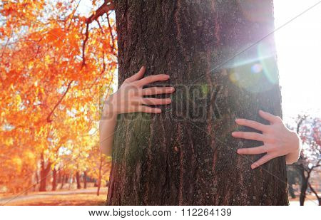 Hands hugging tree in an autumn park