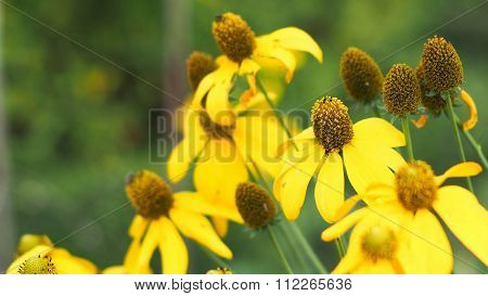 The Yellow Flower