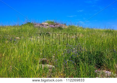 Gentle hills covered with fresh grass and wild flowers. Spring flowering Golan