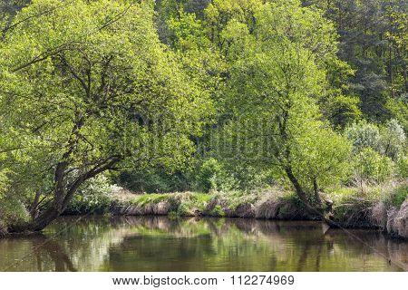 The charming river Kamienna near Baltow, Poland