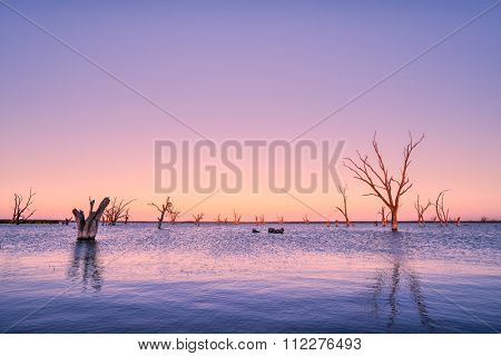 Dead trees in Lake Bonney, SA