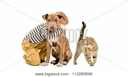 Affectionate boy, pit bull puppy and cat together