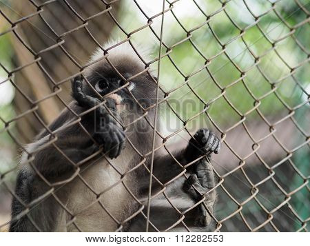 The monkey is in cage