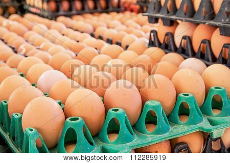 Group of fresh eggs in tray, eggs background.