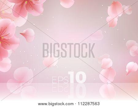 Pink Sakura Petals Fall To The Floor.