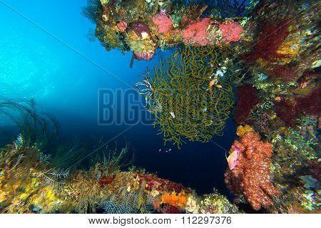 Coral Reef At Wreck