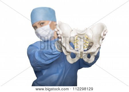 Pelvis in the hands of surgeon