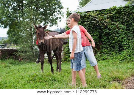 Children Stroking Horse