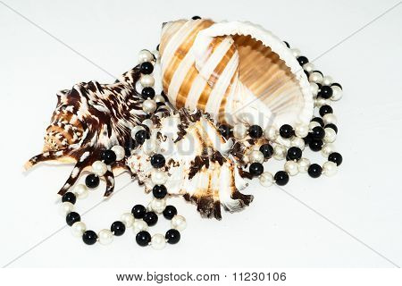 Three Big Seashell And Pearl Beads