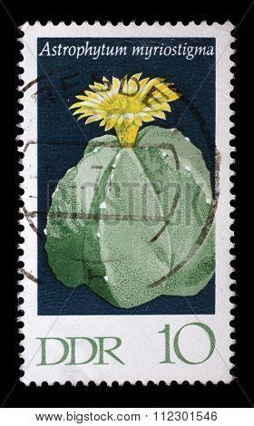 GDR - CIRCA 1970: a stamp printed in GDR shows Hamatocactus setispinus, Flowering Cactus Plant, circa 1970
