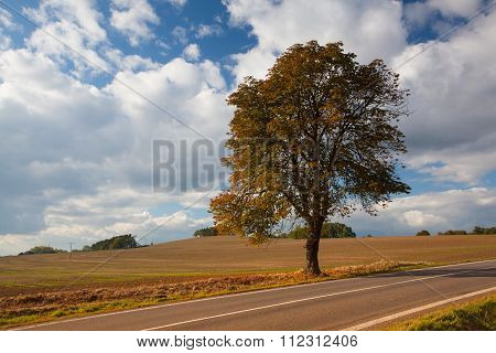 Lonely Tree Next The Road