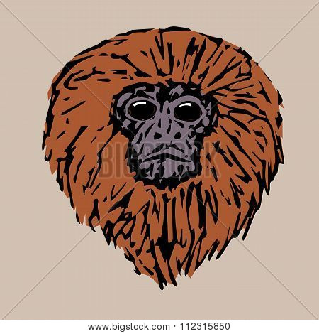 Head Handsome Tamarin