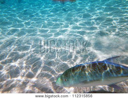 Moorea Lagoon