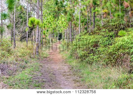 Nature Trail For Cycling And Walking In Phu Kradueng National Park, Loei Thailand.