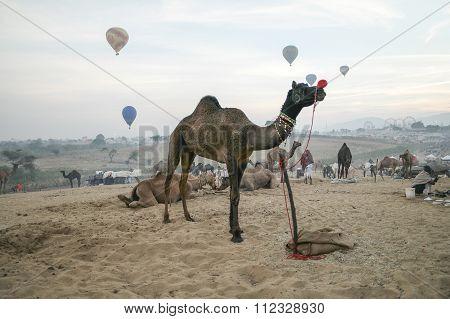 Pushkar, India-nov 22, 2015:morning Sunrise With Hot Air Baloon During Camel Fair In Pushkar.