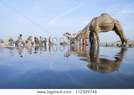 Camel Fair Pushkar 2015.