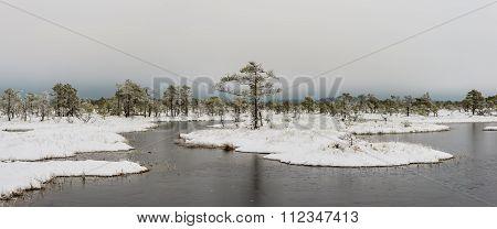 Bog landscape in winter