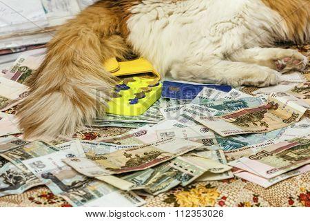 Money Cat Under Tail