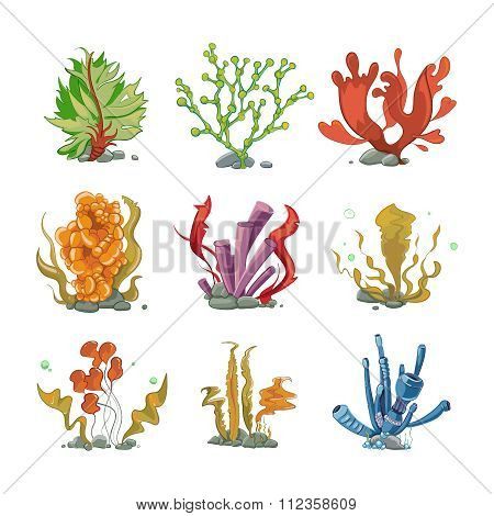 Underwater plants in cartoon vector style